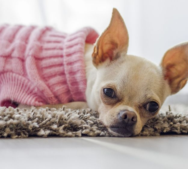 Easy Sewing Projects Your Pooch Will Love